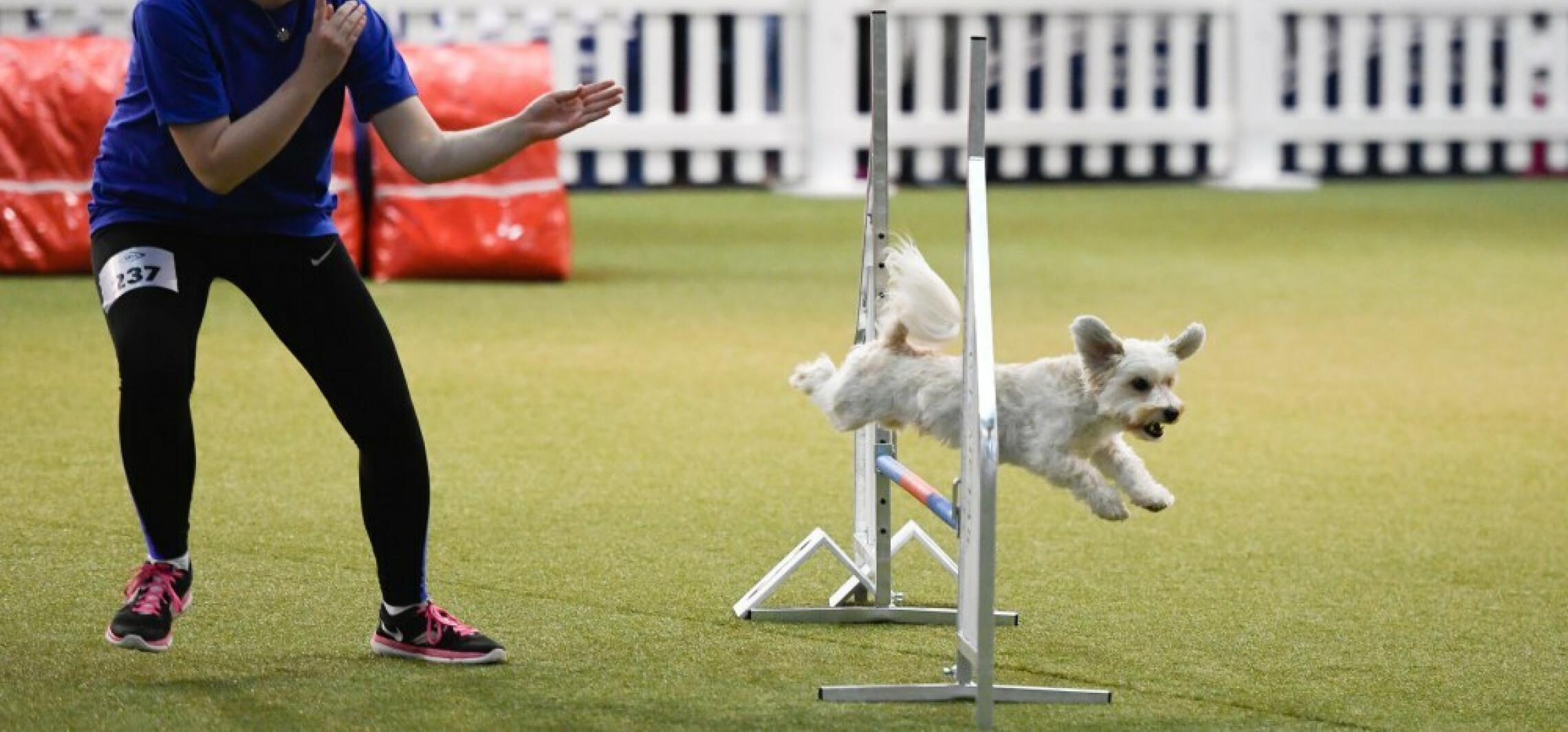 Utalentowane psy prawie natychmiast uczą się rozpoznawania nowych słów