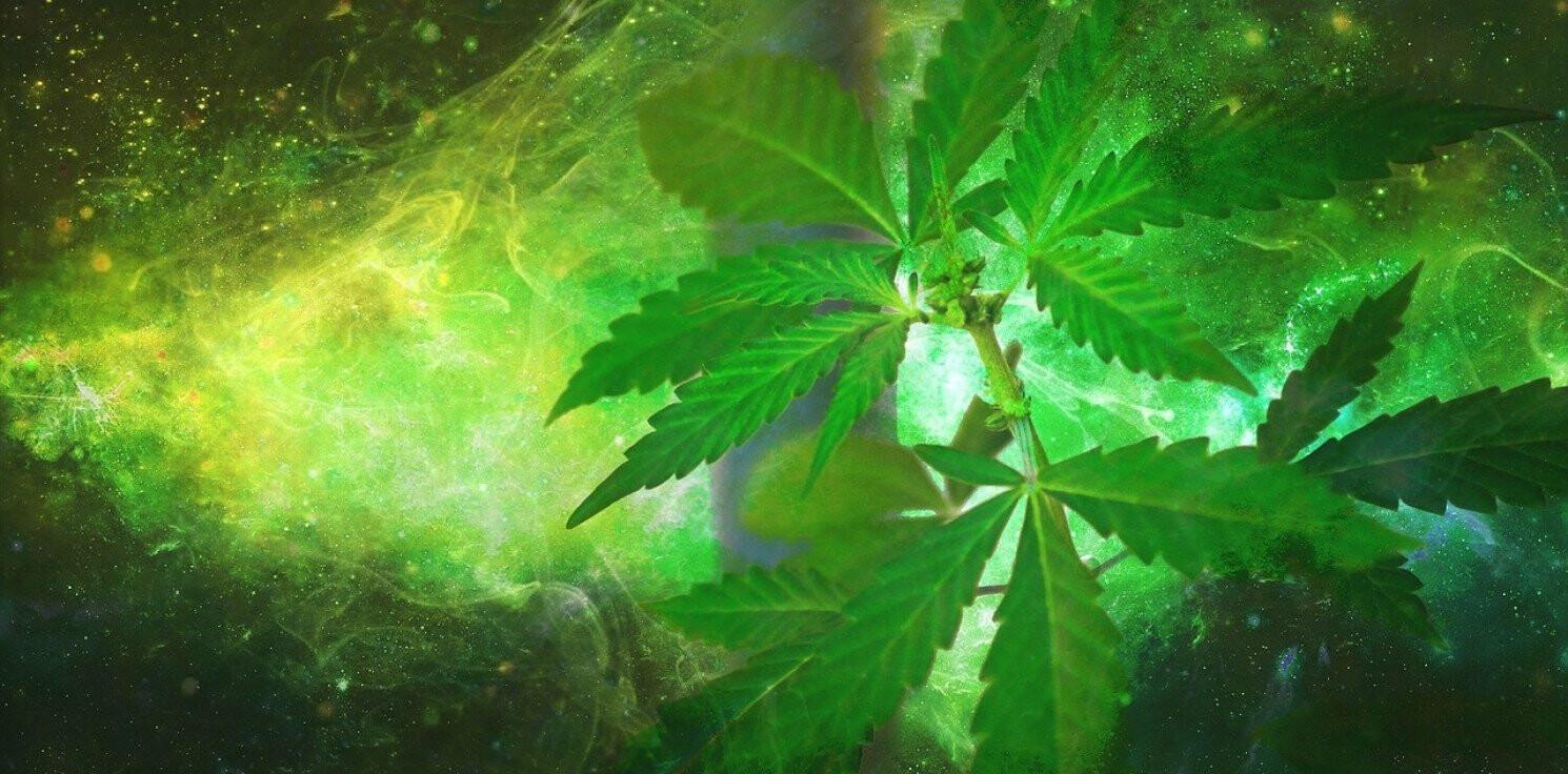 Region - Narkotykowa wpadka. Marihuana i amfetamina w audi