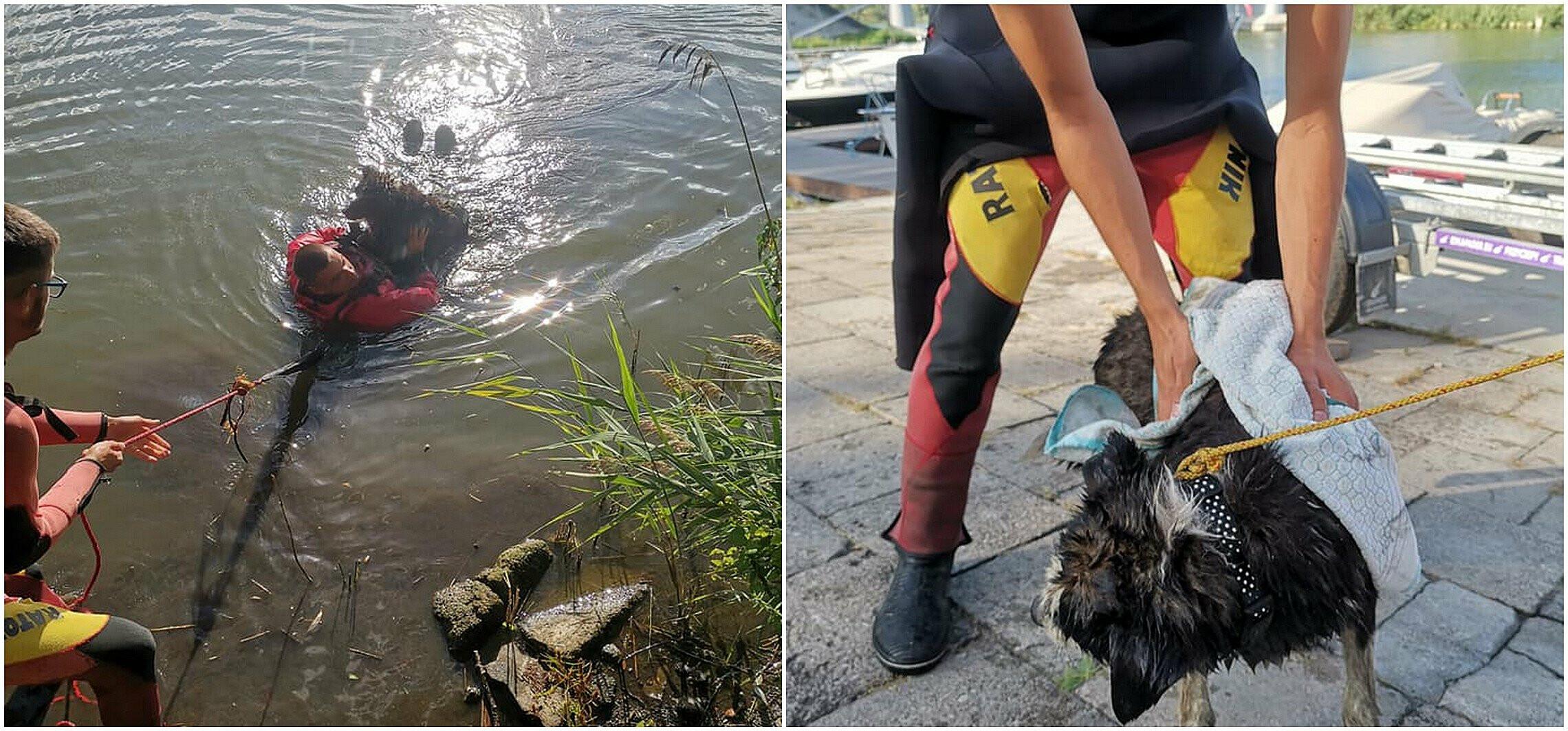 Kruszwica - Ratownicy wodni wyciągnęli z Gopła psa