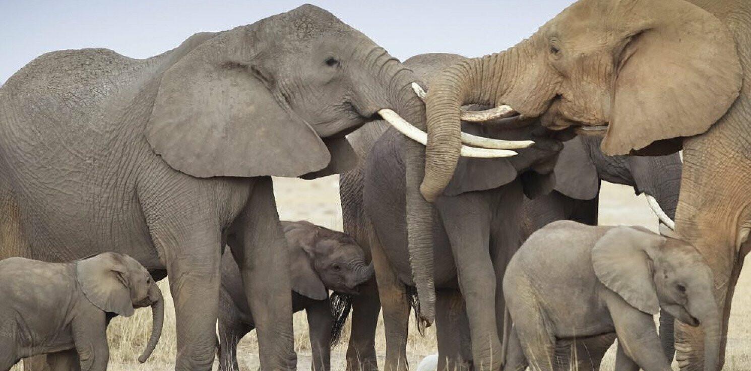 Świat - WWF: przez działanie ludzi w ciągu 50 lat liczebność dzikich zwierząt spadła o 68 proc.